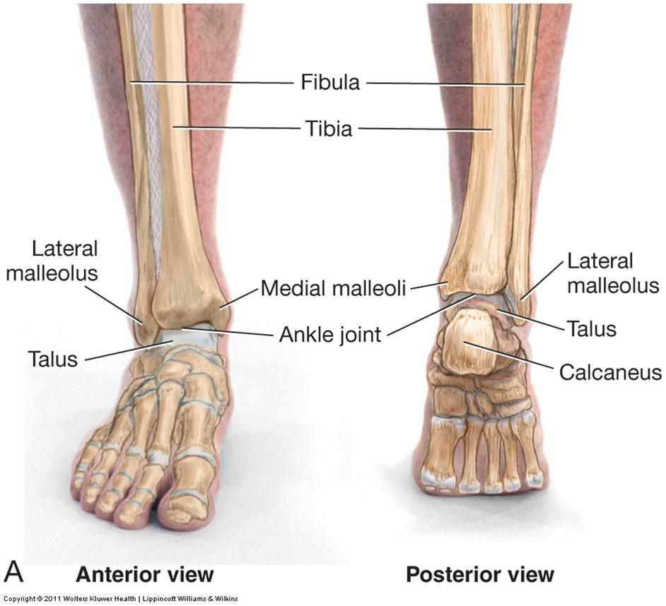 ankle Archives - MD direct