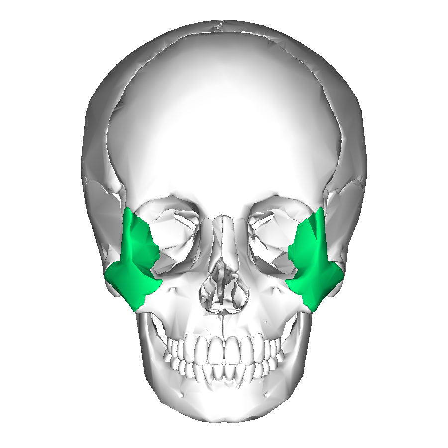 Zygomatic Bone Archives Md Direct